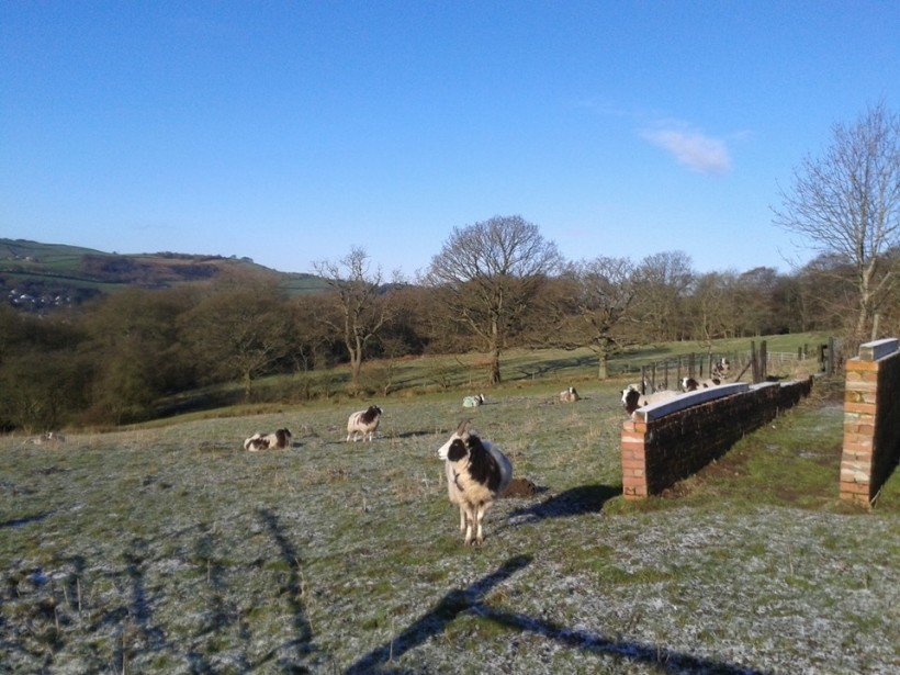 Field on a snowy morning